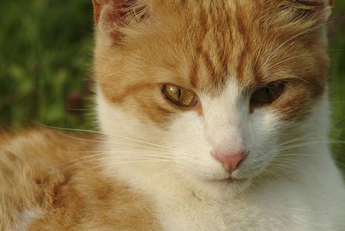 Cat704-12
