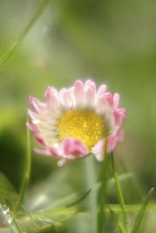 Daisy404-1
