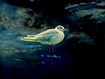 'blue gull' von ursfoto