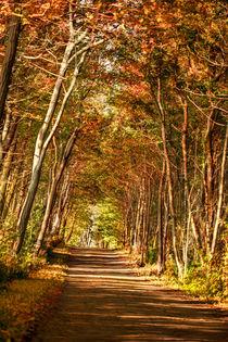Herbstwald von Martina Ebel