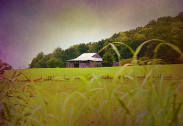 Purple-barn
