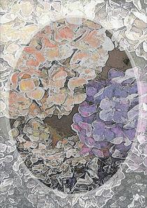 Hortensienblüte von Roland H. Palm