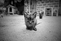 Stray Cat #1 von Antonio Jorge Nunes