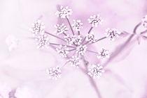 Blüte vom Dreiblatt in rosa von deern-vun-diek