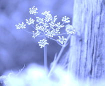 Girsch an Treibholz Pastell blau von deern-vun-diek