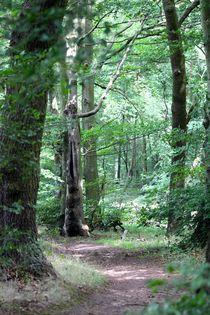 Eifler Wald by © Ivonne Wentzler
