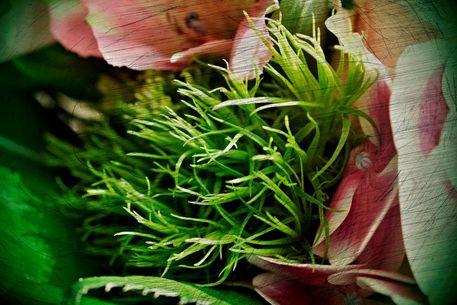 Blumen-100d-kopie-cut-6000b