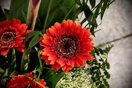 Blumen-099-6000b