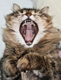 Gut gebrüllt, Löwe - Well roar'd, Lion by Frank Zoller