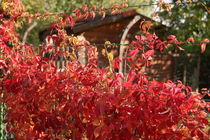 Der Herbst naht von Ralf Wolter
