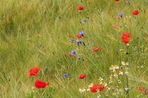 Feld mit Mohnblumen von Ralf Wolter