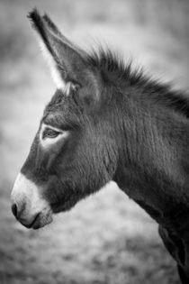 Donkey - Esel von Ruby Lindholm