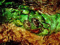 Sei kein Frosch von Heidrun Carola Herrmann