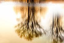 Tree Silhouettes von fraenks