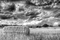 The Summer Farm by David Pyatt