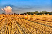 Summer Evening Farm by David Pyatt