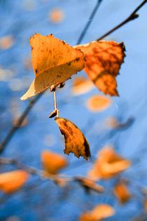 Herbstliches Blattgeflatter von Heidrun Lutz