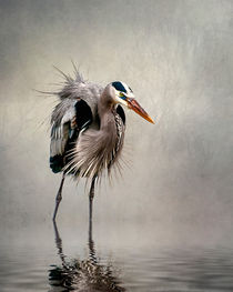Heron in mist by Brian Tarr