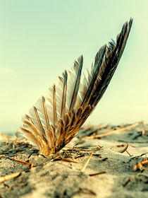 Lost feather by Mike Santis