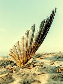 Feather-asa-beach
