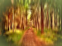 A-path-through-the-forest-2