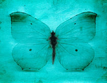 Vintage Grunge Butterfly by Steve Ball