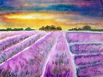 Lavendefeld by Irina Usova