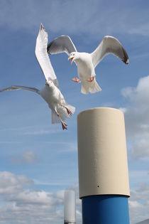 2 Möwen - 2 Seagulls von wattfrucht