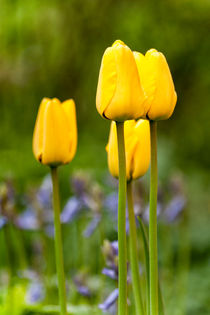 Yellow flowers von Mike Santis