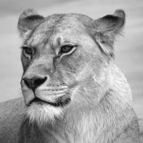 Löwin von Kathrin Battenstein