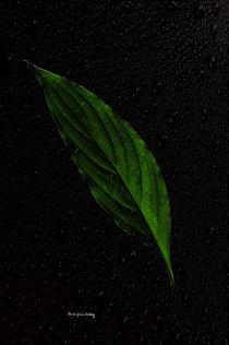 Healthy Green von Randi Grace Nilsberg