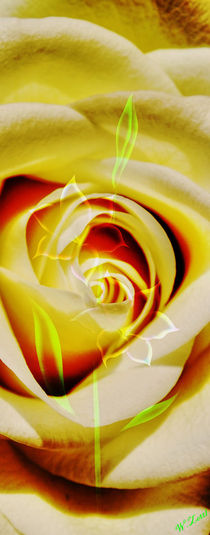 Art Deko 8 Rose-Glockenlilie von Walter Zettl