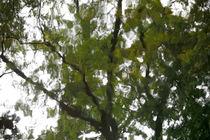 Blätter Blues  von Bastian  Kienitz