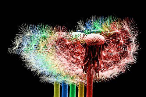Pusteblume-014c-6000-5farben-cutb