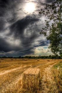 Storm on the Farm von David Pyatt
