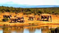 Elefantenherde - herd of elephants - by Wolfgang Pfensig