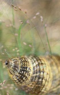 Shell von © Ivonne Wentzler