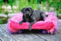 Kurt und das pinkfarbene Sofa von Heidi Bollich