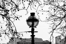 Narnia by Ian Gazzotti