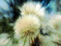 fuzzy-heads by ursfoto