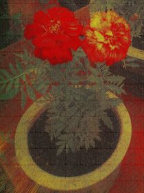 Potted Tagetes. (Canvas) von Heather Goodwin