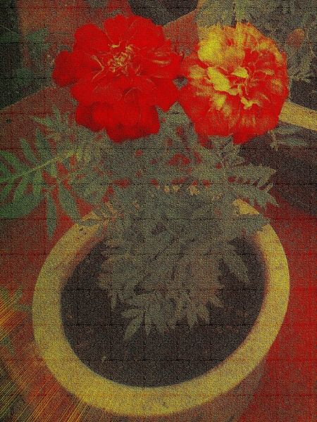 Potted-tagatees-canvas-2