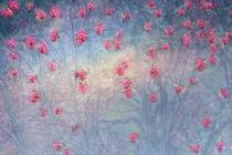 BLOSSOMS RAIN von © Ivonne Wentzler