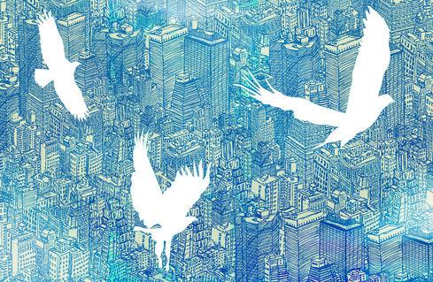Birds-day-laptop