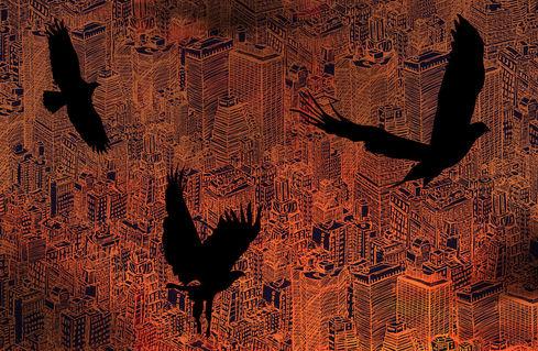 Birds-night-laptop