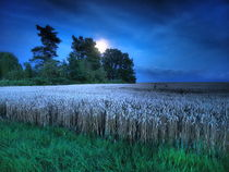 Grain und Supermoon by smk