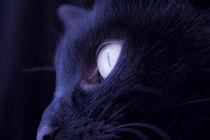 Eye black cat von Gema Ibarra