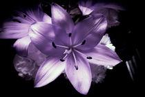 Lilac flowers von Gema Ibarra