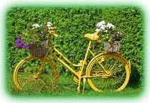Blumenpost von georgfotoart