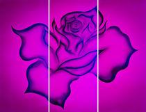 Blütenträume 26 Rose by Walter Zettl